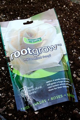 Det här mykorrhizapulvret från England har jag använt på hälften av hasselplantorna.