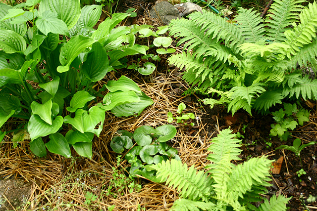 Un policultivo de hortalizas perennes