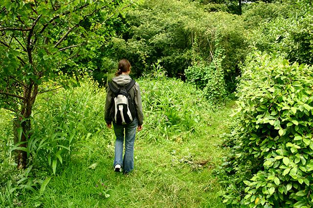 Martin Crawfords skogstrdgård