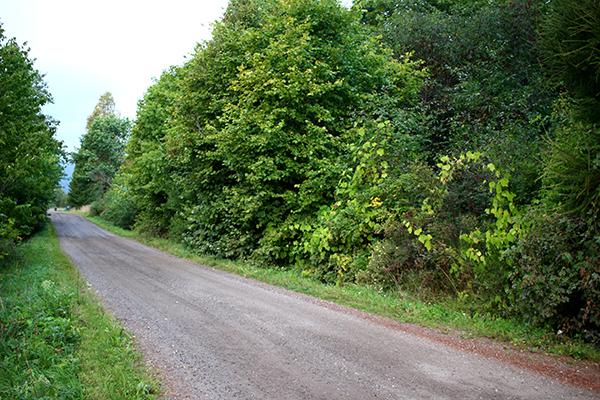 Varken huset eller uppfarten till Ove och Margareta Johanssons hus syns från vägen.