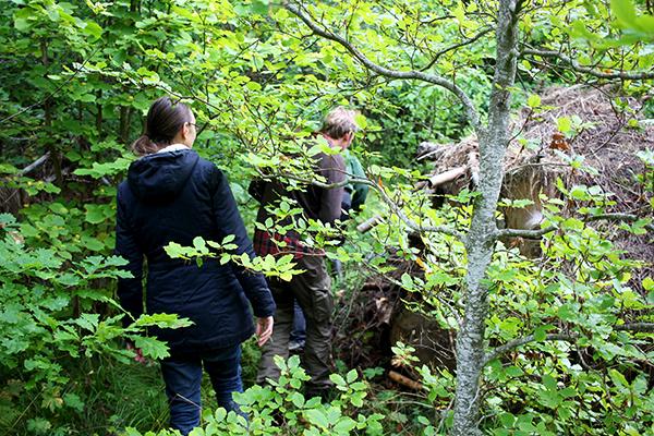 Ek, bok, hassel, lind och ask dominerar den över 40 år gamla skogsträdgården i Östloning.