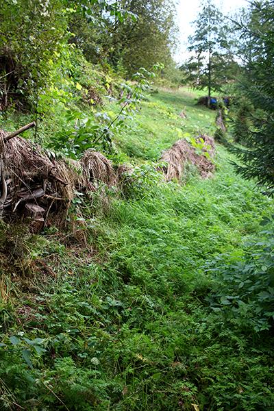 De långa, branta sydsluttningarna mot Indalsälven är förutsättningen för att kunna odla känsliga växter på denna breddgrad.