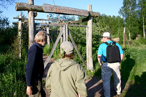 Hel skogsträdgården på Holma omgärdas av ett högt viltstängsel. I Puttmyra skogsträdgård har vi valt en annan väg.