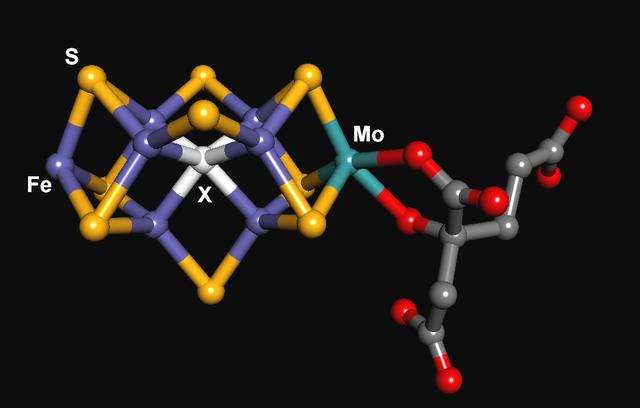 Så kan nitrogenase se ut i modellform. För att bilda enzymet krävs det alltså även järn, molybden och svavel. Källa: PatríciaR, Wikimedia Commons.