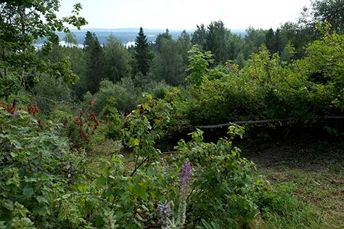 Vackra utsikter och mängder med intressanta kulturväxter utspridda över hela gården. Sällan har jag sett platser med så mycket potential som på Observatoriet Permakulturgård i Norge.