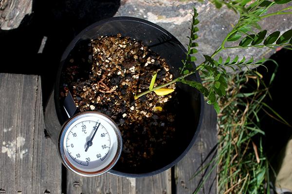 I platskrukan stiger temperaturen snabbt över gränsen för vad som är bra för rötterna. 32 grader efter bara några minuter.