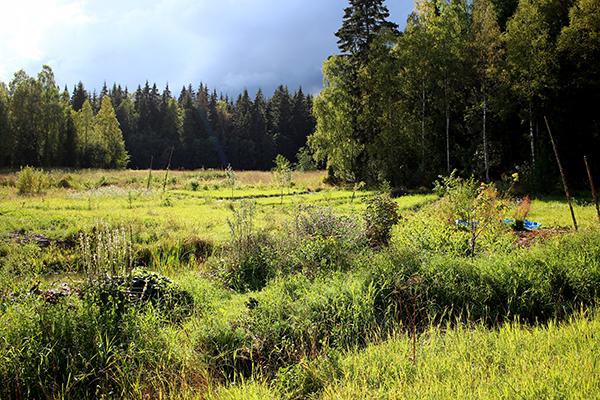 Puttmyra skogsträdgård hösten 2015.