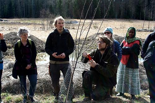 John Gustafsson och Martin Gustafsson visar hur man kan tänka vid uppbyggnadsbeskärning av unga äppelträd.