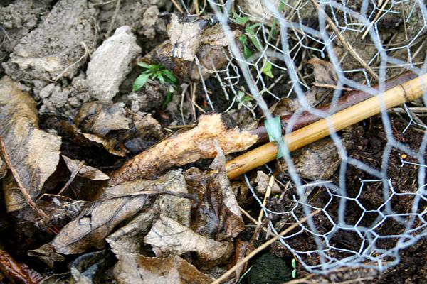 Así se veía en varios lugares durante la primavera 2014 en el jardín forestal de Puttmyra. Salpicamos una hermandad y perdimos unos diez manzanos.