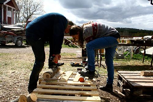 Martin Gustafsson och Annevi Sjöberg borrar hål inför ympningen av alm respektive gråal.