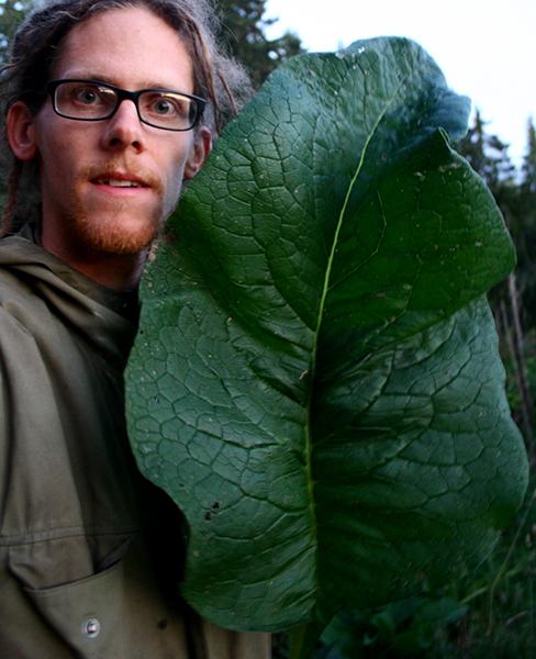 Vallörtssorten 'Bocking 14' har en enorm växtkraft och kan skördas upp till fem gånger per säsong för sina näringsrika blad.
