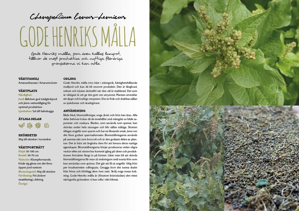 Ett 60-tal växtporträtt kommer att finnas med i boken.